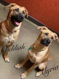 Deliliah and Alyria