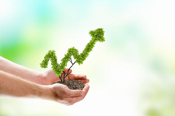 Growing your wealth is like gardening | First Alliance Credit Union