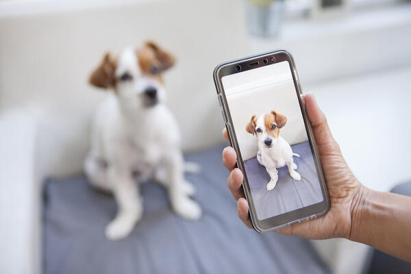 first alliance credit union pet month photo contest 2019
