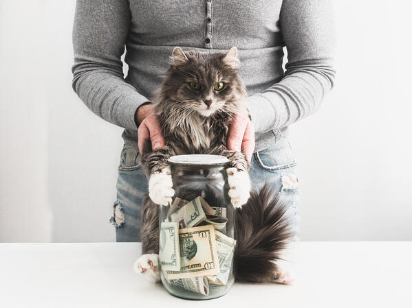 Cat with owner holding jar of money to save money for pet expenses